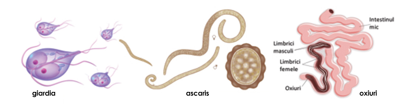 viermi intestinali la copii)