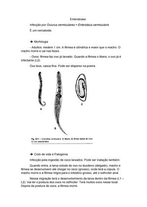 enterobius vermicularis forma evolutiva