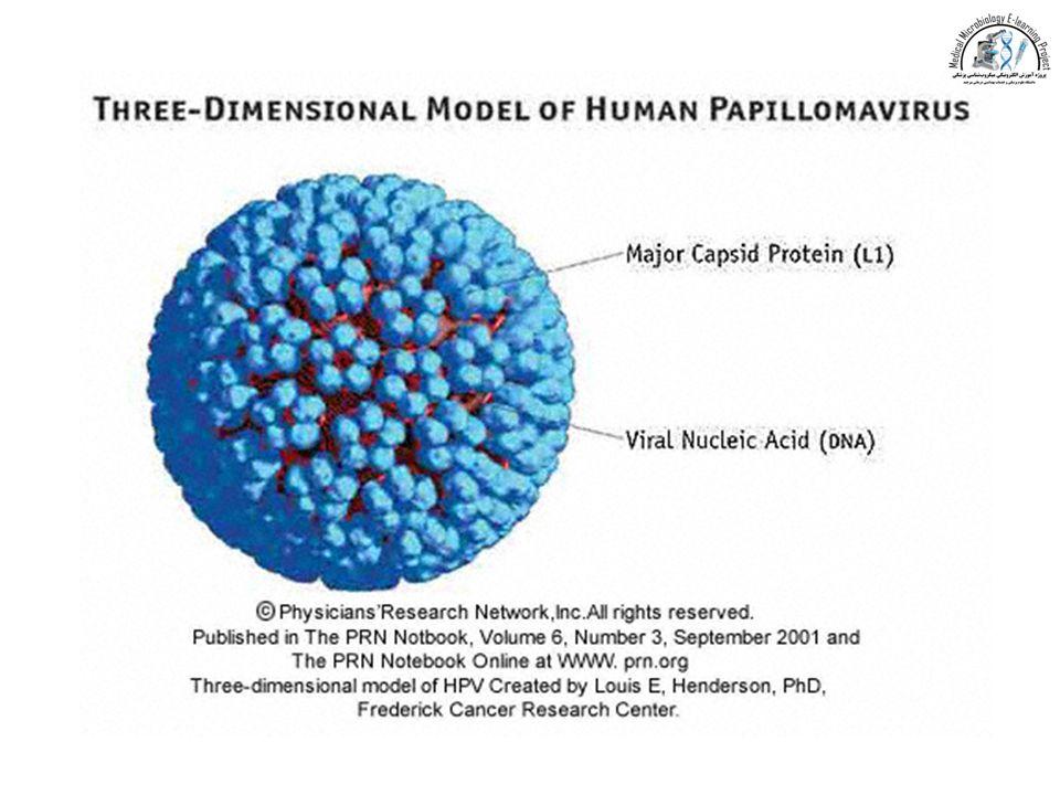 hpv virus a dna)
