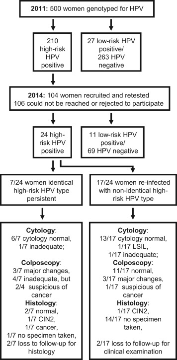 hpv high risk type 66)
