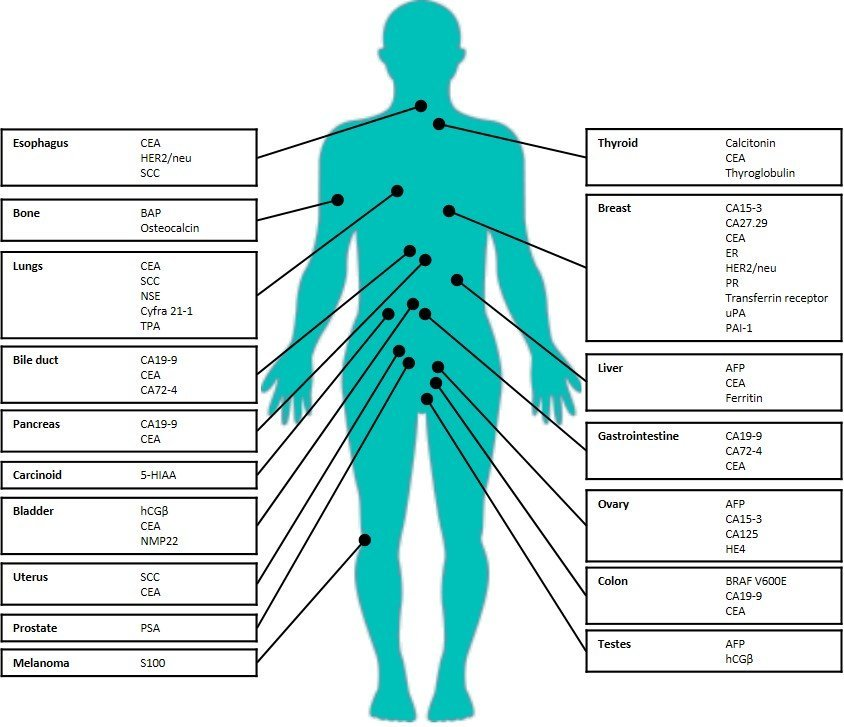 cancer genetic marker