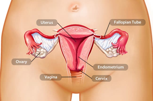 endometrial cancer how fast does it spread