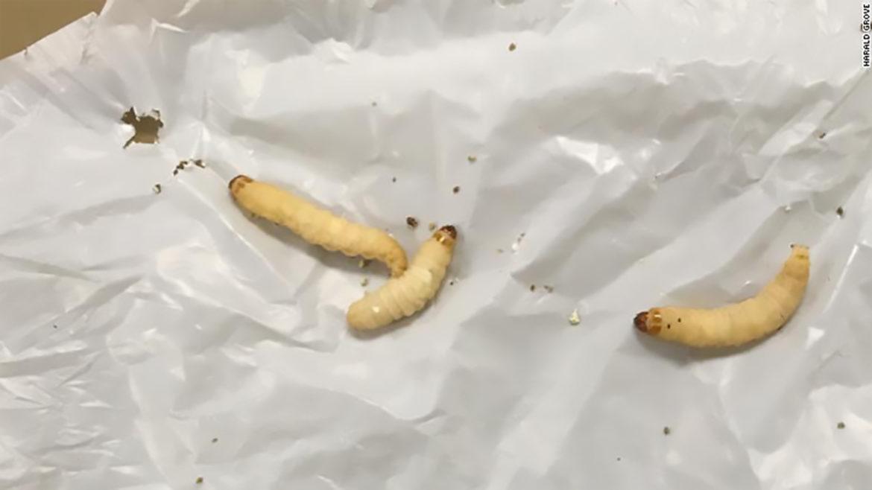 viermi în stomac de la contaminanți)
