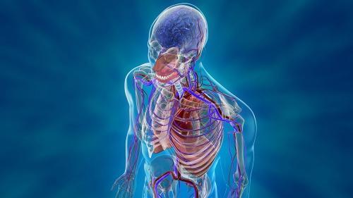 în corpul uman