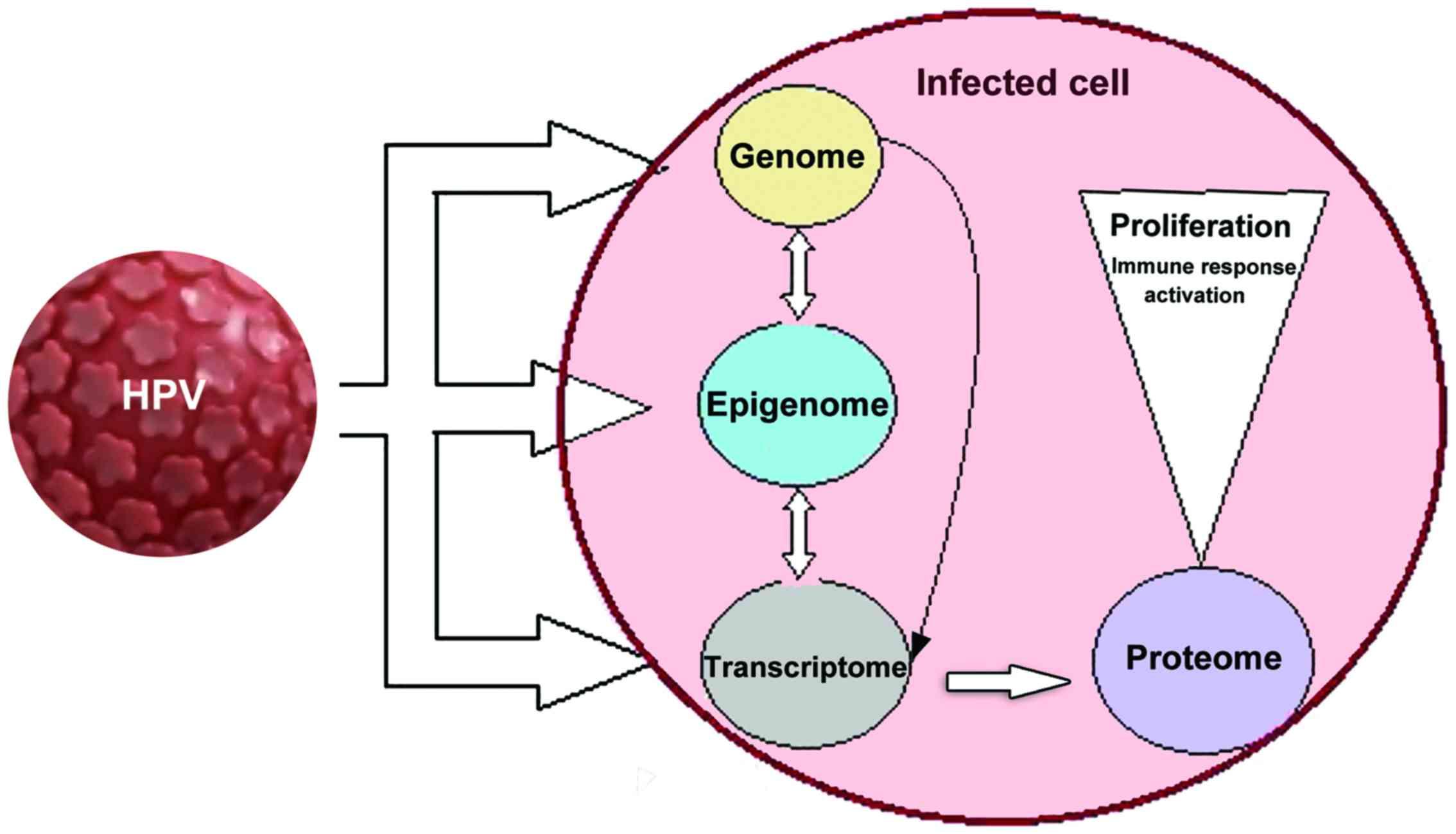 il papilloma virus e grave)