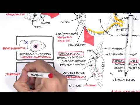 enterobius vermicularis nțdir