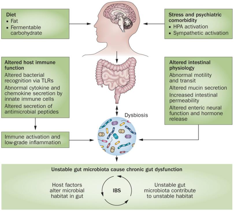 Neuroendocrine cancer prognosis liver - Dan G. Duda - DF/HCC Neuroendocrine cancer disability