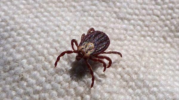 Viermi si paraziti: cum ne luptam cu ei Diferența dintre helminți și lamblia