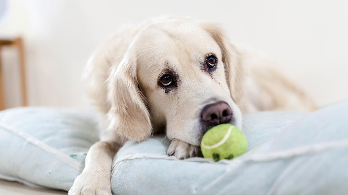 giardia nel cane rimedi naturali