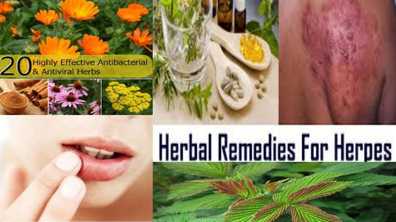 hpv cure herbs)