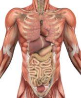 efectul helminților asupra corpului uman