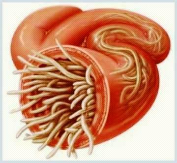 prepararea parazitului în plămâni