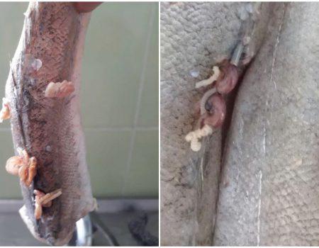 ANSA anchetează cazul peștelui cu viermi de la Grădinița 177