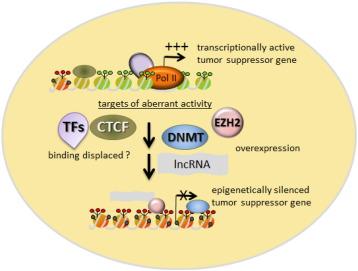 familial cancer tumour suppressor genes