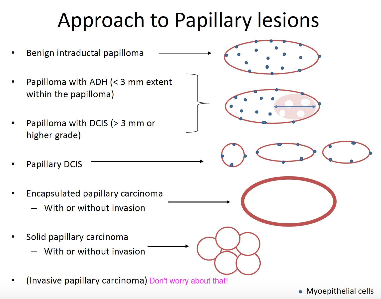 papillary lesion vs papilloma răspuns imun la paraziții ppt