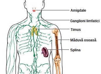 cancerul ganglionilor limfatici)