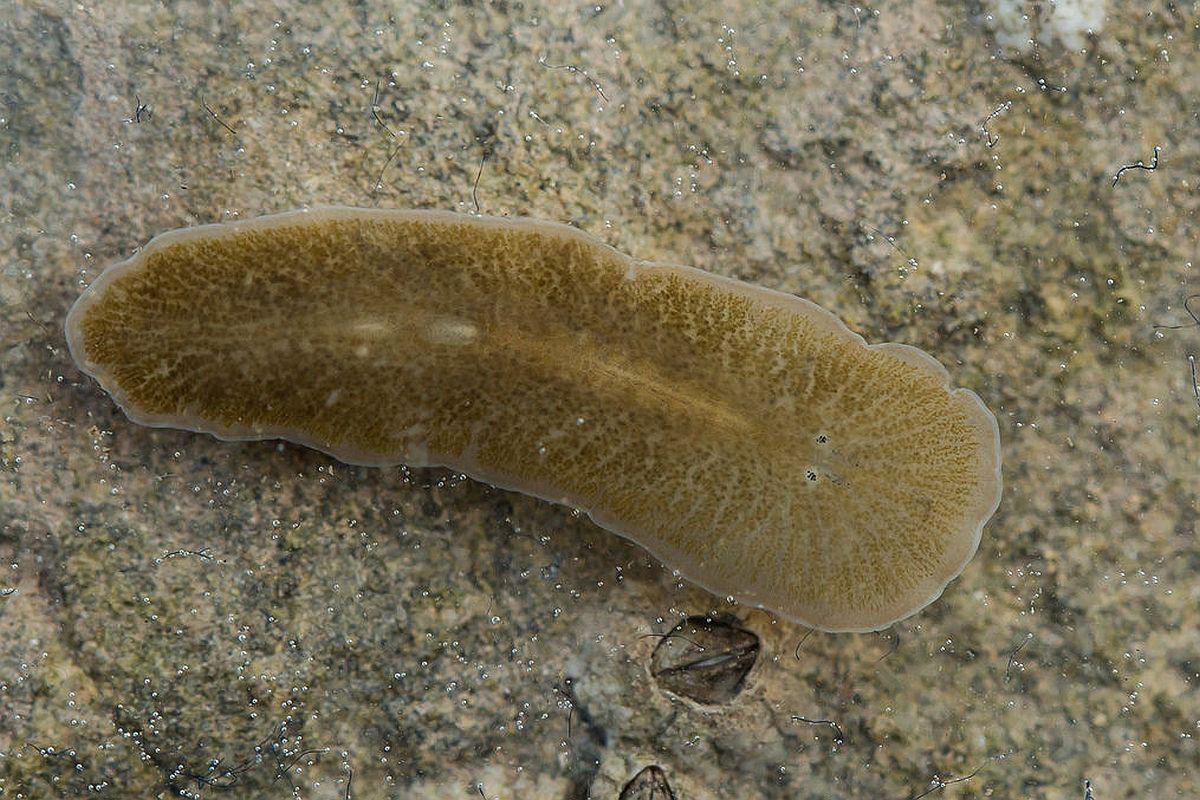 comprimate parazite vierme pentru copii
