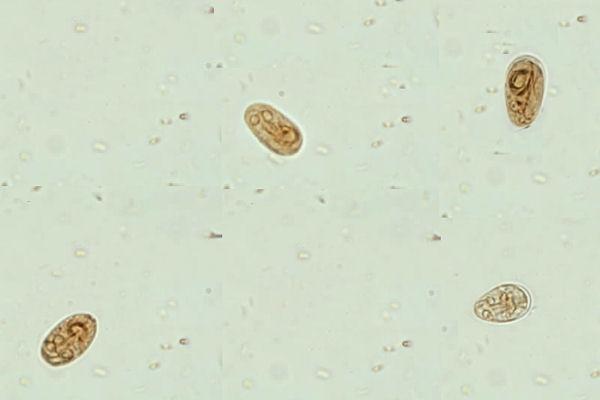 humanes papillomavirus zunge contact dermatită între degete