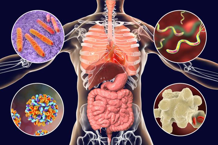tumori papilloma virus