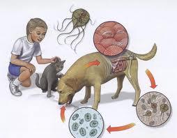 localizarea giardiozei în organism