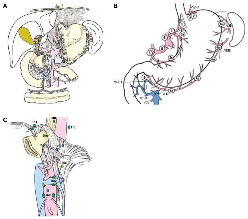 gastric cancer lymph node station