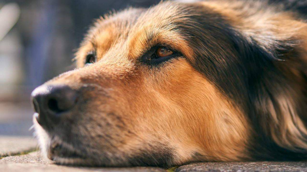 giardia nel cane rimedi naturali)