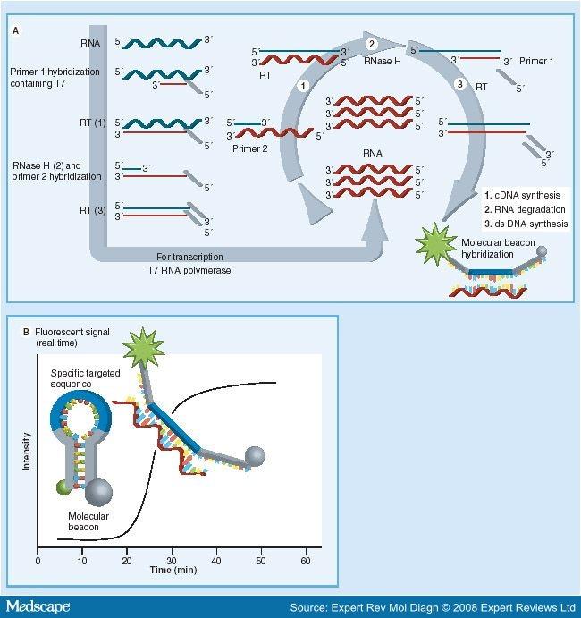human papillomavirus dna or rna