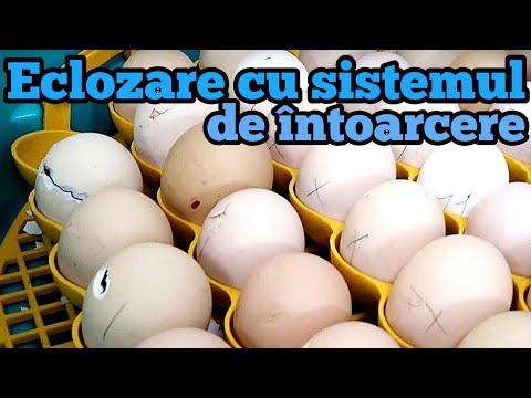 Prepararea ouălor de vierme rotunde)