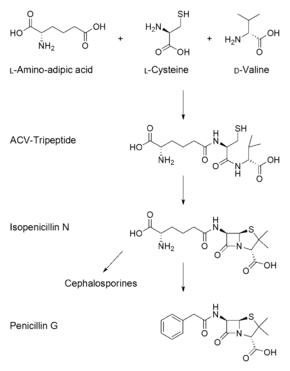 agenți antihelmintici și antiprotozoici