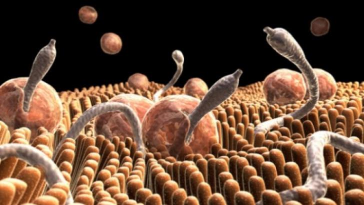 simptome și tratament viermilor