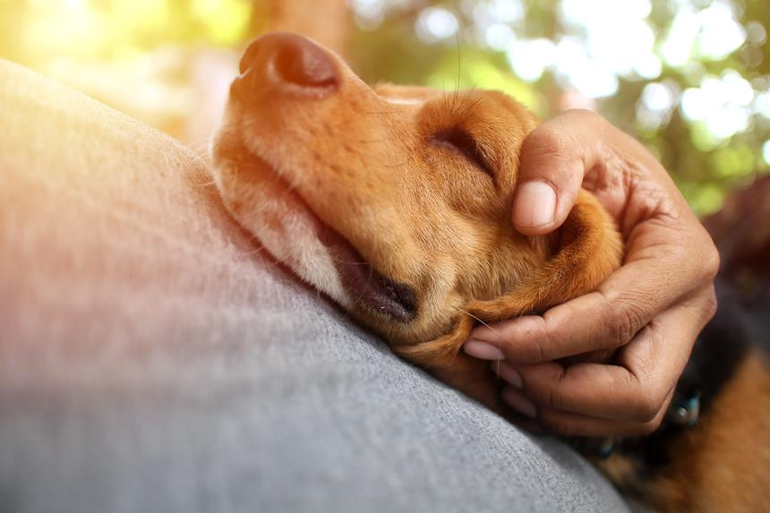 chisty giardia u psa leczenie)