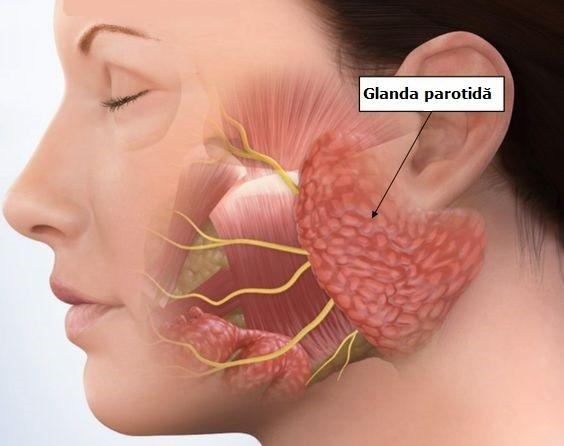 cea mai buna detoxifiere pentru colon papilloma virus vaccino dove si fa