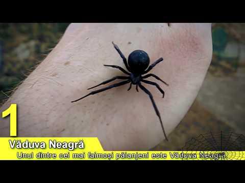 Tratarea viermilor de viermi după câți mor, Oxiuriază - Wikipedia