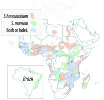 schistosomiasis uptodate)