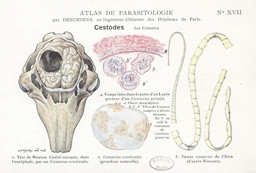 tratamentul paraziților pulmonari medicament cuprinzător pentru viermi pentru viermi