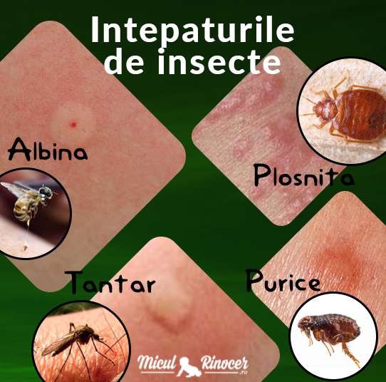 diferite tipuri de insecte