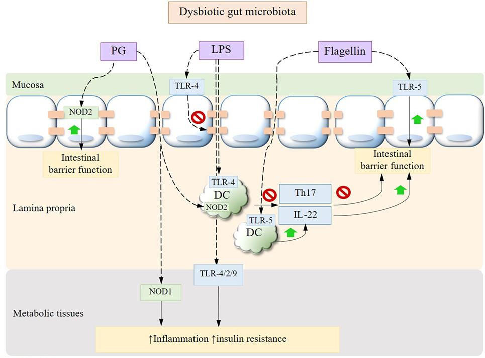 dysbiosis microbiota care s-a recuperat după recenziile verucilor genitale