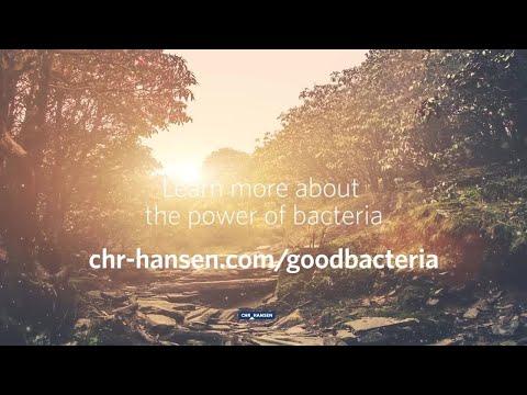 bacteriile sunt saprotrofe și paraziți