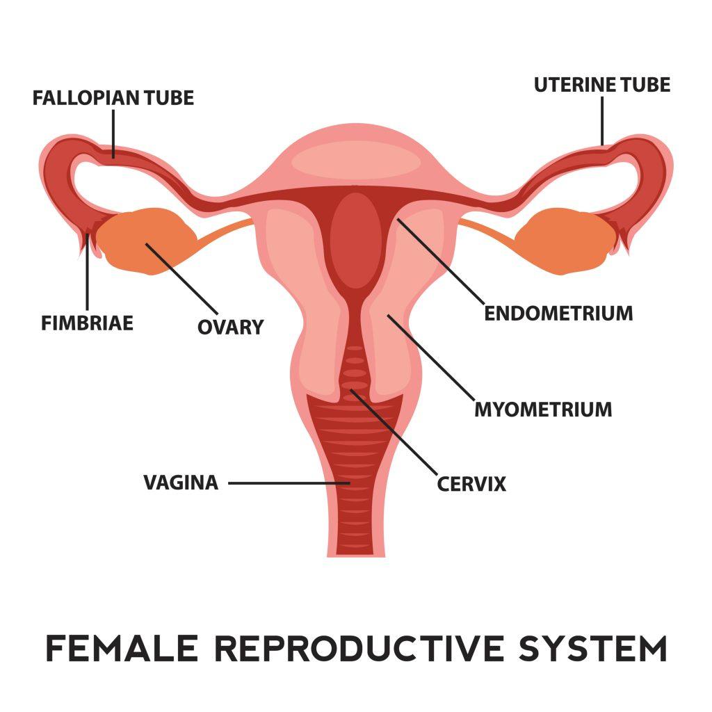 eroziunea colului uterin și a condilomului)