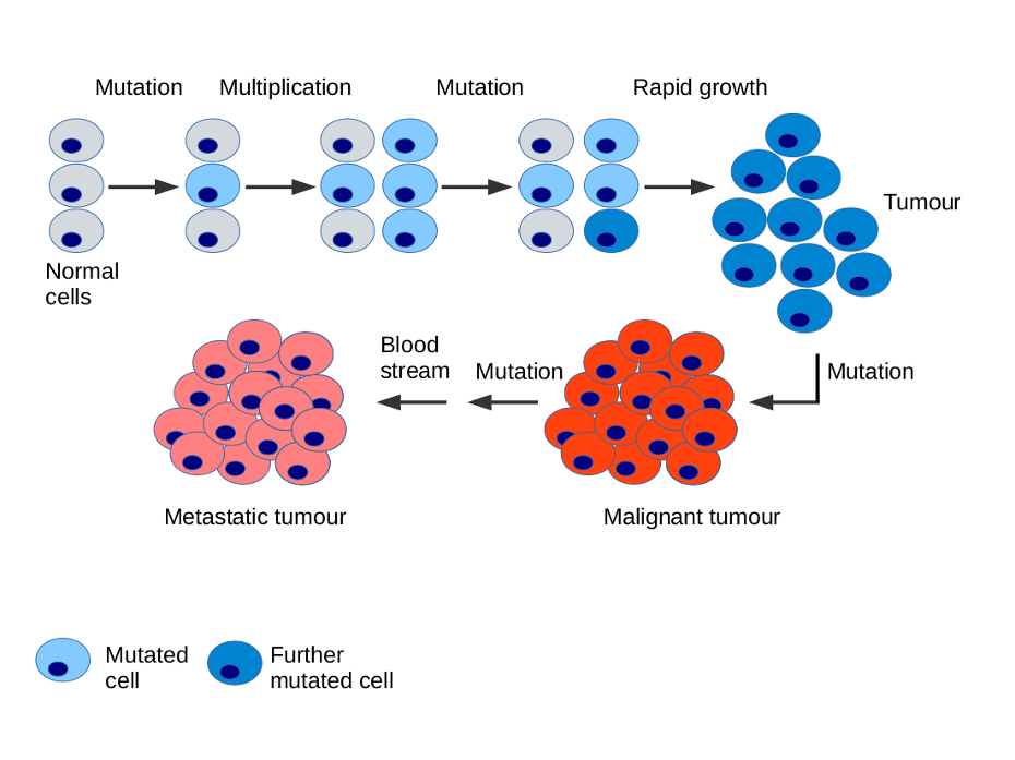 cancer genetic causes)