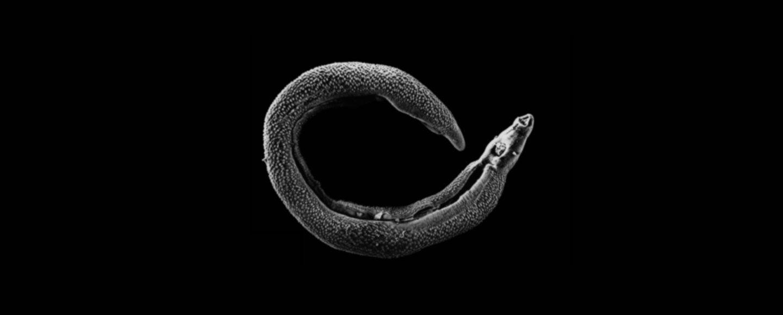 schistosomiasis funding)