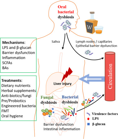 zinc dysbiosis