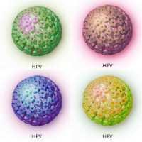 Papilloma virus nelle donne Hpv lingua contagio, Hpv virus donne