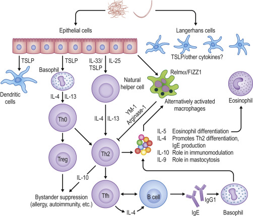 helminth and immune system)