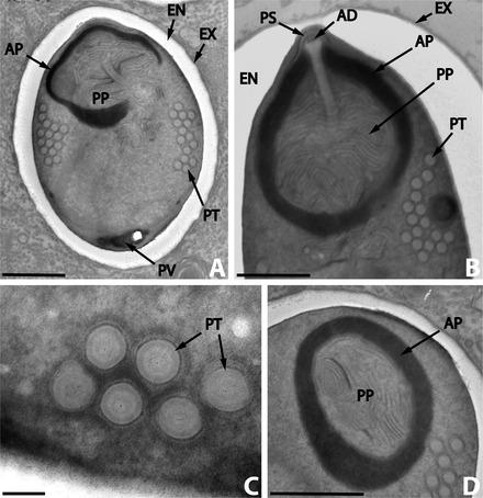hiperparazite fungice