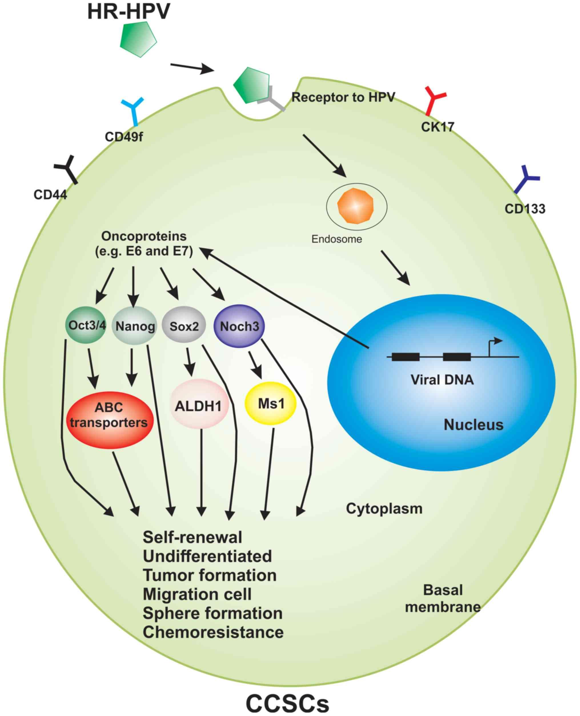 hpv et cancer du colon