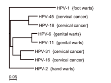 hpv type 16 cause warts)