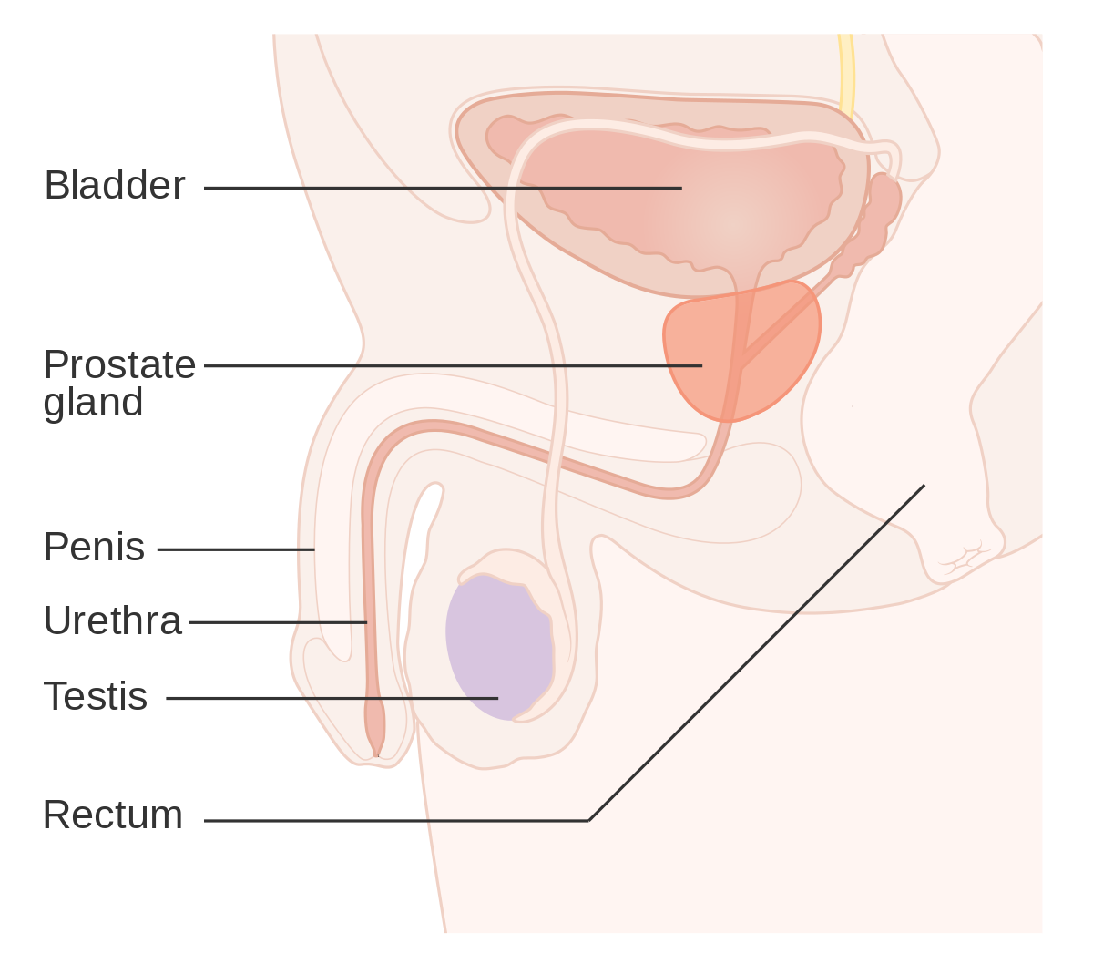 Hpv cancer prostate. Hpv cancer prostate