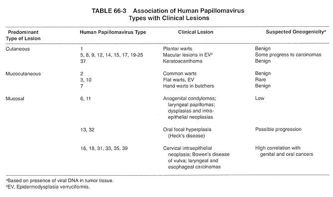 human papilloma virus strains
