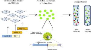 human papillomavirus recombinant vaccine)
